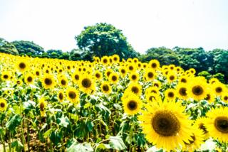 夏の能古島